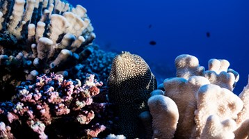 an underwater eel next to corals