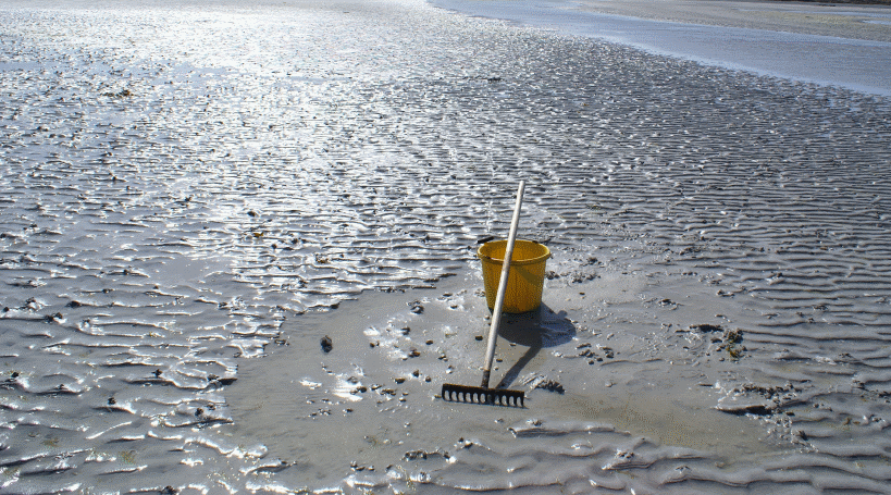 sandy beach with a bucket and rake