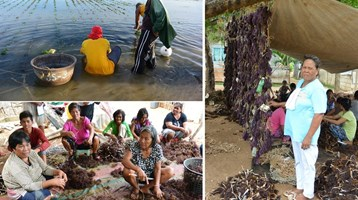 Seaweed farming in the Philippines