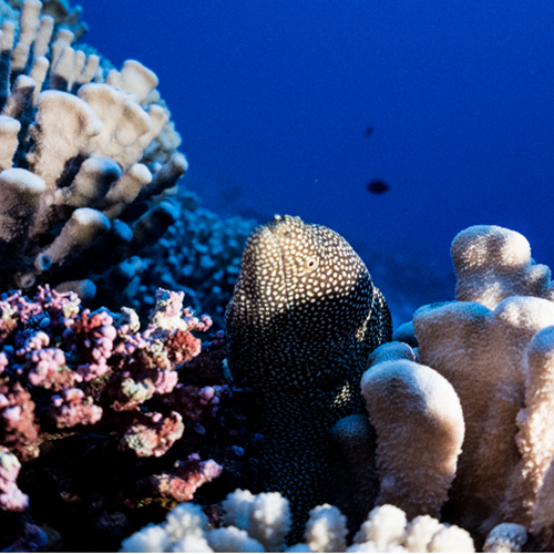 a fish in corals